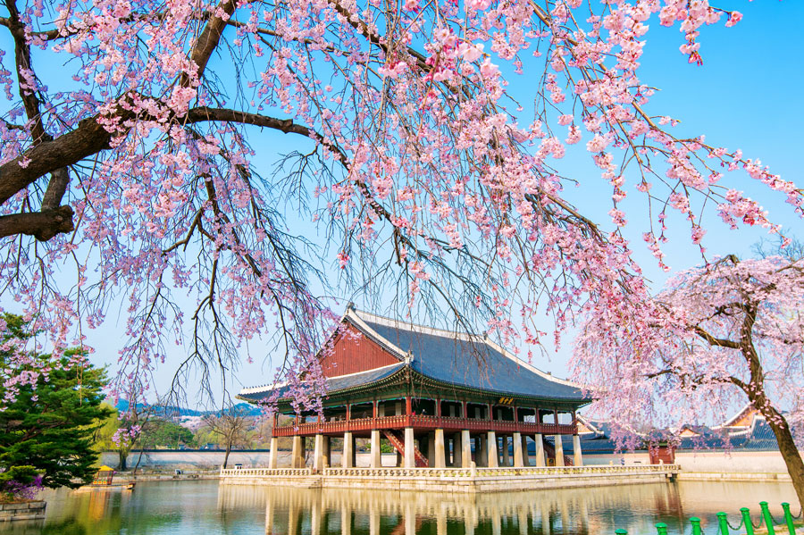 Korea tour guide